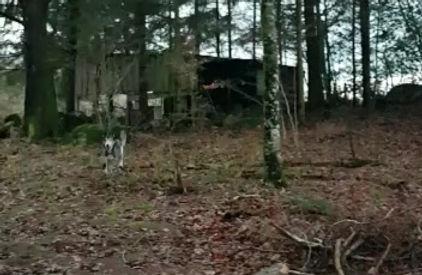 Husky's in la forêt du Le Chien Qui Rit