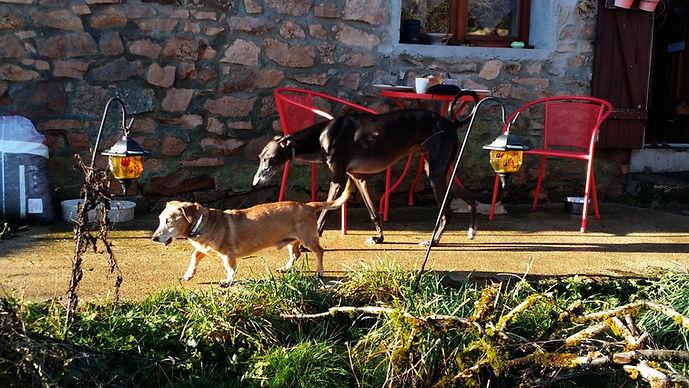 op vakantie met honden in frankrijk