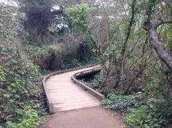 Lands End - Fern Hill Tours SF.JPG