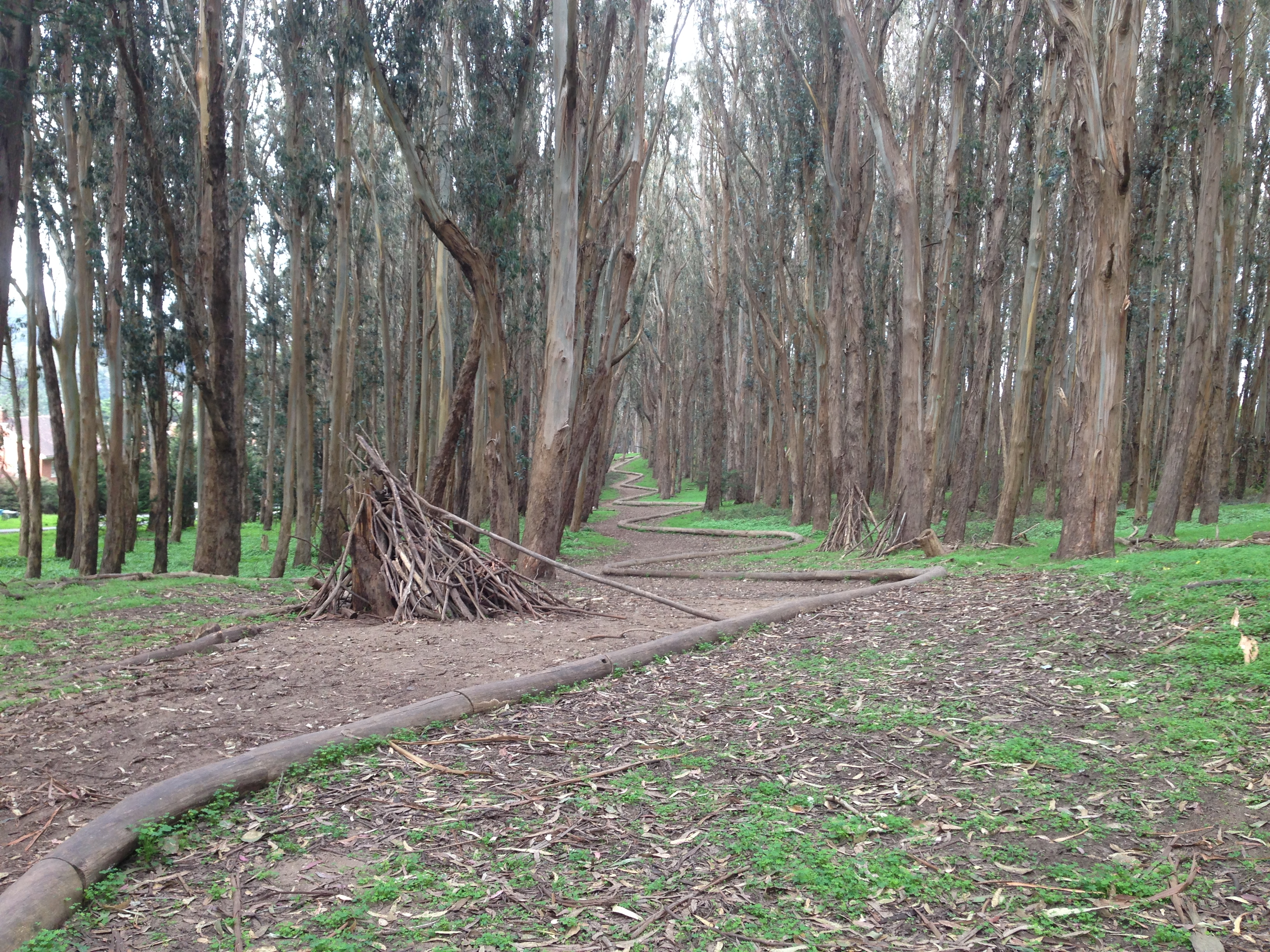 Wood Line - Goldsworthy - Fern Hill Tours SF Presidio.JPG