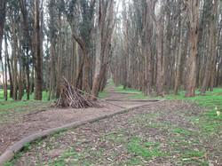 Wood Line - Goldsworthy - Fern Hill Tours SF Presidio.JPG