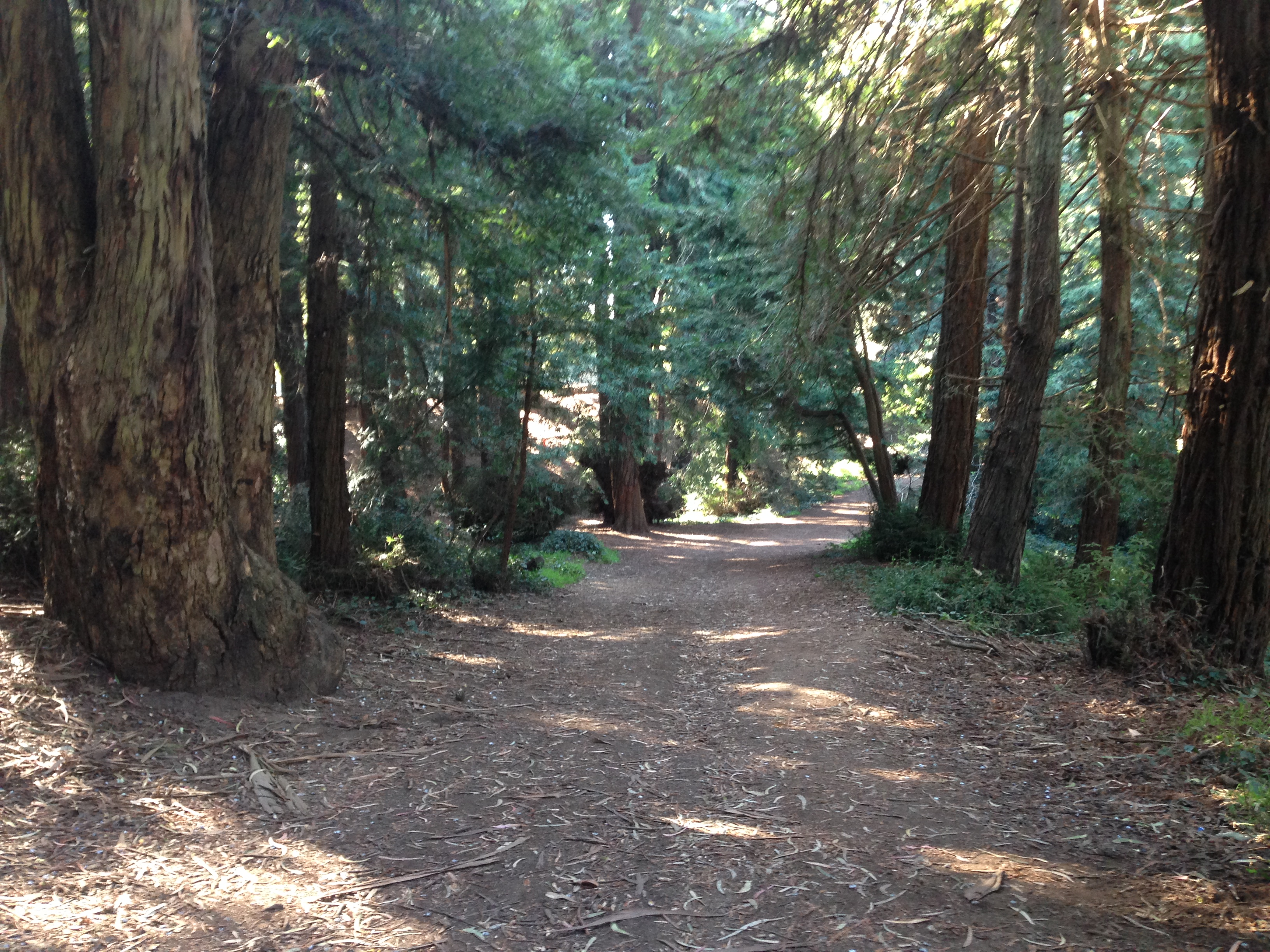 Redwood Grove - Fern Hill Walking Tours SF.JPG