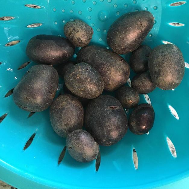 Home Grown Potatoes!