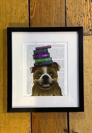 Bulldog with books