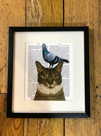 Cat with pigeon