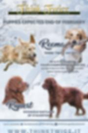 2019-Locandina-Reema-x-Rupert-winter-the