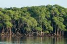 Generosos e produtivos, manguezais geram US$ 5 bilhões ao Brasil