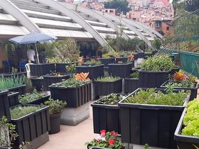Fazenda Urbana de Paraisópolis já produziu 300kg de hortaliças    Nossa região também pode