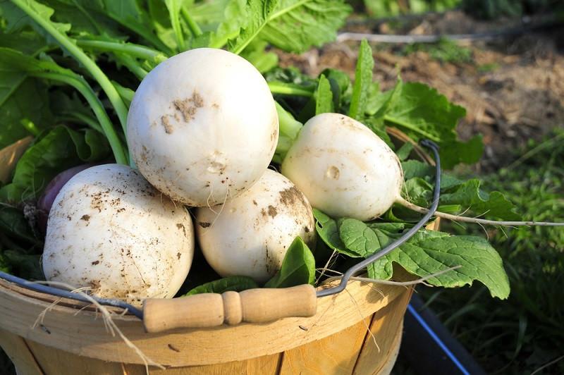 Organic Farming in Oklahoma - Nabo