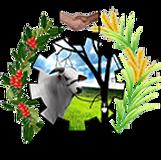 logo_pm_brasnorte_editado.png