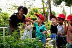 Jogos e desafios gratuitos para crianças explorarem a natureza