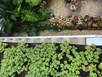 4 formas de captar água da chuva e reaproveitar águas cinzas