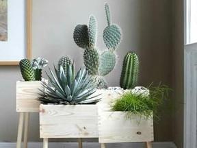 Plantas trazem energia positiva aos ambientes