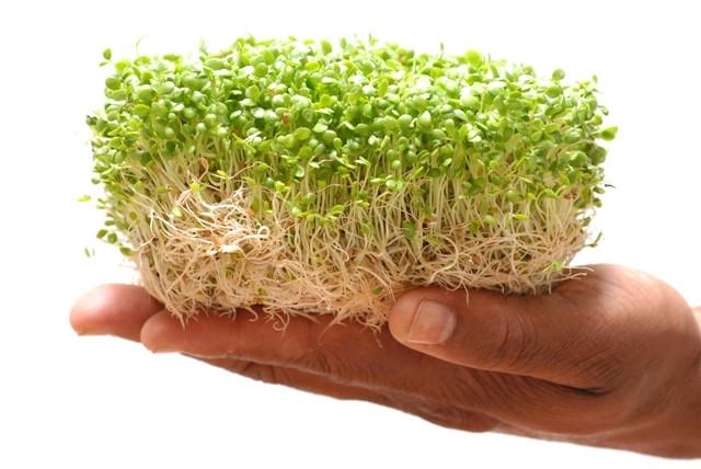 Brotos de agrião são considerados  'Superalimentos'