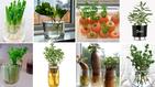 19 Ervas e Vegetais que podem ser plantados na Água
