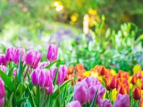 Hoje inicia a primavera a Estação das Flores, da beleza da vida da existência
