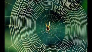 Arquétipos & Poder: Aranha, tecelã do universo