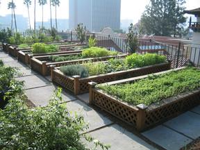 Quais plantas podem e devem ser cultivadas juntas?