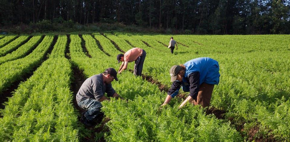 Medida aprovada pelo Conselho Monetário Nacional atende demanda do ministério - Foto: Albino Oliveira/Secretaria Especial de Agricultura Familiar