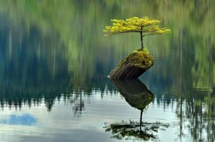 Arvores que são um lembrete da força incomensurável da natureza