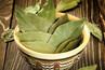 Chá de folha de louro: 6 vantagens do consumo dessa bebida