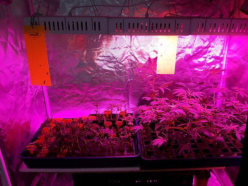 Allgemeine Informationen zu Samenpflanzen und Stecklingen