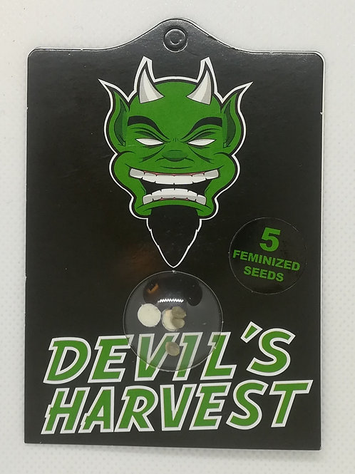 Devil's Harvest Golden Haze, fem 5 Stk