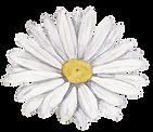 Fleur blanche