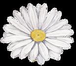 Bílá květina