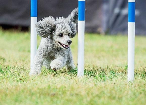 24/8: Fortsättningskurs, Unghundskurs för agilityhunden (Steg 2)
