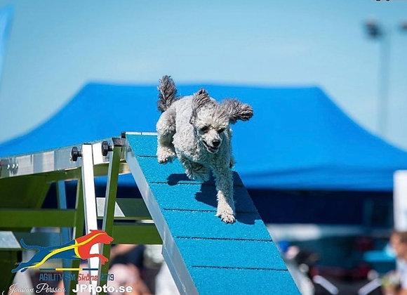 24/5: Unghundskurs för agilityhunden (steg 1)