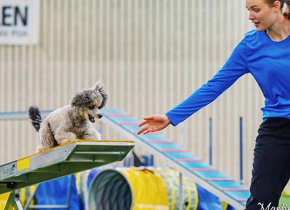10/2: Valp/unghundskurs för agilityhunden (steg 1)
