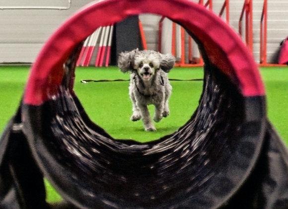 9/3: Valpkurs/unghundskurs för tävlingshunden steg 1