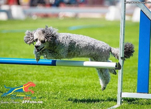 11/1: Unghundskurs för agilityhunden (Steg 1)