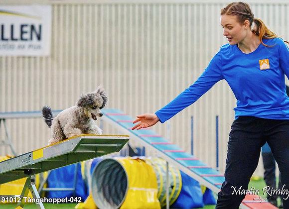 18/5: Fortsättningskurs - Unghundskurs för agilityhunden (steg 2)