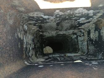 destruction nid de guêpe 42 / forez