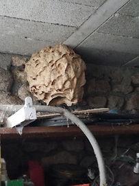 intervention destruction nid de guêpe dans un garage de la Loire