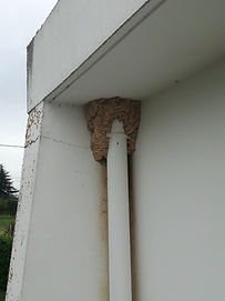 nid de guêpe angle d'un batiment