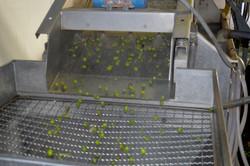 Olio biologico Case Sgaraglino