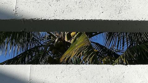 #015 Havana Biennial in Matanzas 2019
