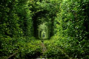 greengrove.jpg