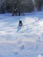 Frisbee à la neige