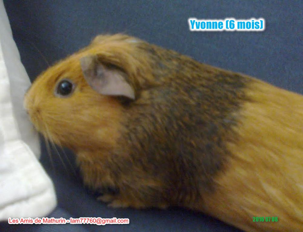 YVONNE 1