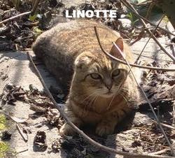 LINOTTE_edited_edited