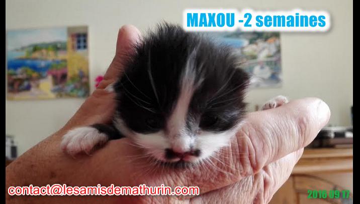 MAXOU 1