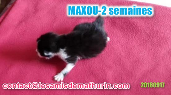 MAXOU 2