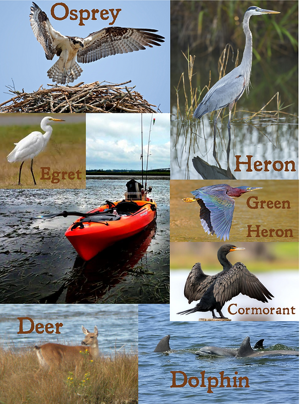 wildlife poster.png