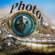 smiths-green-eyed-gecko_8627_990x742[1]