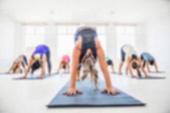 Yoga downdog.jpg