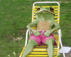 Funny-Frog-Relix